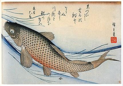 Hiroshige il maestro della natura for Carpa giapponese prezzo